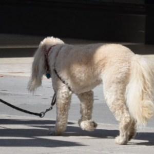 犬が軟便な時に考えられる原因