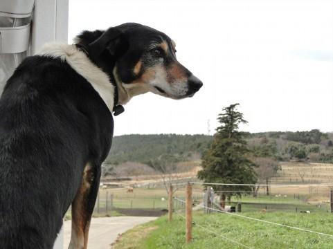 犬のストレスとなること4つ。飼い主がやりがちな犬のストレスになること