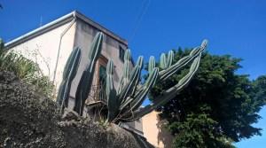 WP_20151015_11_17_38_wp-Kaktus
