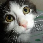 Meow Monday: The Story of Anakin the Two Legged Cat