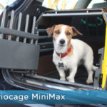 How Safe is Your Dog in the Car?