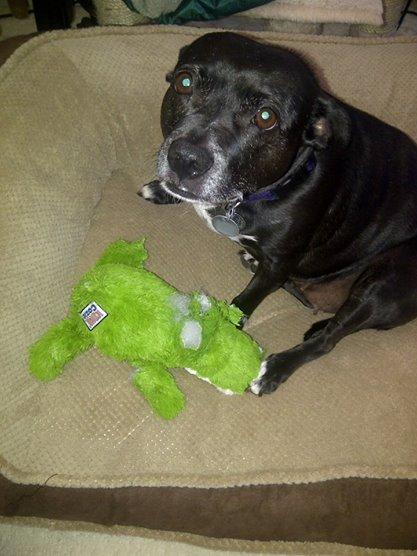 Lily the gator slayer