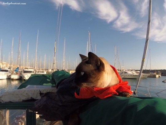 bailey the boat cat