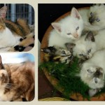 Saving Cats One At A Time-Stray Cat Alliance