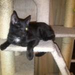 Delios My One Eyed Black Kitten