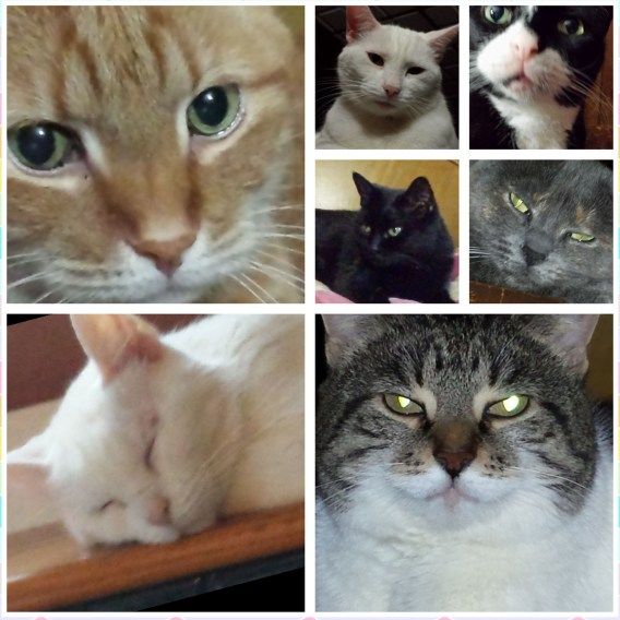 Cat Collage 2015