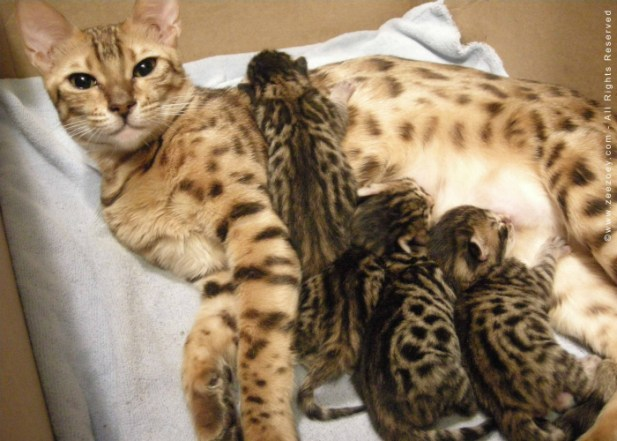 5. Nursing Cat copy