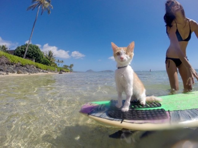 kuli-cat-surfing-s_3541358k