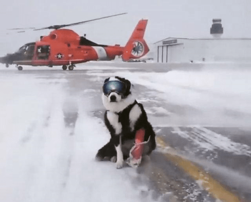 Piper the airport dog hard at work