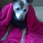 Senior Moments: Keeping Your Old Dog Warm in the Cold