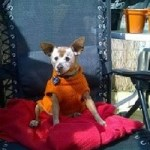 Senior Moments- How I Care For My Old Dog Red