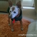 Senior Moments: 7 Easy Ways to Senior Dog Proof Your Home