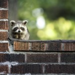 How to Protect Your Pet From Wildlife