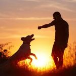 Understanding the Power of the Spiritual Bond Between Pet, Animal, and Human