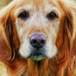 Grooming Tips for Senior Dogs