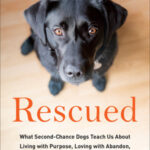 Podcast: Rescued by Peter Zheutlin