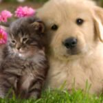 Symptoms of Diabetes in Dogs and Cats