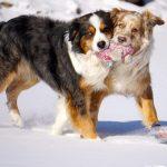 Winter Dog at Play Photo Finalists