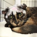 Cat Recovered From Scabies Has a Unique Look