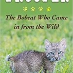 Podcast: Meet Trooper the Bobcat With a Tale to Share