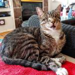 Podcast: Tommy the Blind Cat Wonder