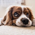 What Is The Best Raw Food For Dogs?