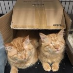 Two Blind Kitty Brothers Are A Huge Hit!