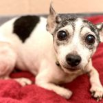 Miracles Do Happen! Puppy lost 12 years ago found and reunited with owner