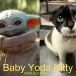 Baby Yoda Kitty Goes Viral