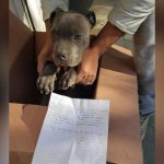 12 Year Old Boy Leaves His Puppy at the Door of a Shelter with a Note that Will Make You Cry