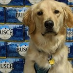 Busch is giving 3 months worth of beer to people who adopt or foster a dog