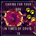 Caring For Your Dog In Times Of Covid-19