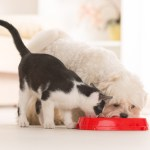 Does Health Insurance For Your Pet Pay Off In The Long Run?