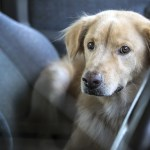 Crucial Animal Transport & Relocation Tips to Abide By