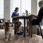 Is Your Business Ready to Welcome Pets?