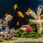 5 Decorations To Bring Color To Your Aquarium
