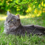 Should Allowing your Cat to Roam Outside be Illegal?
