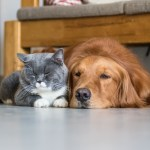 5 Debunked Myths On Pet-Sitting