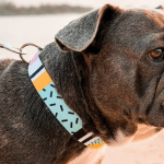 Dog Collar Styles for Every Dog