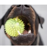 6 Tips on Buying Dog Toys for New Owners