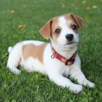 Puppy Love: 6 Ways To Express Your Appreciation To Your Dogs