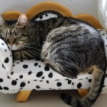 5 of the Best Cat Accessories Ideas
