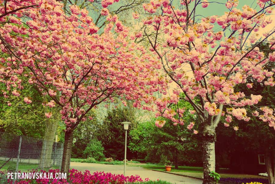 Warum manche Bäume im Frühling so schön sind