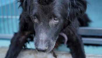 Family surrendered 14-year-old dog for being 'too old'