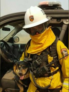Dog leaps into fireman's arms