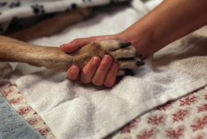 Dog paws 2 john moore getty