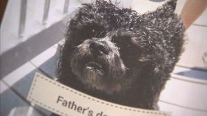 Family dog dies after soaked in chemicals