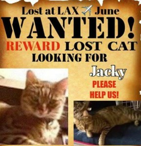 Jacky the lost cat