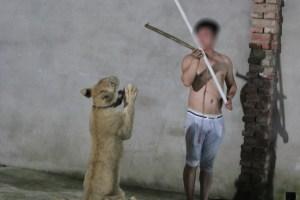 Lion trained PETA