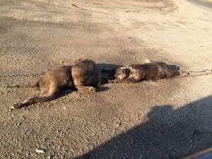Lucerne Dog deaths 3